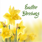 EASTER BLESSINGS DAFFODILS PACK OF 5