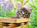 CAT IN WOOD BASKET: EXODUS 33:14