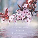 BLOSSOM & WATER: PSALM 23:2-3