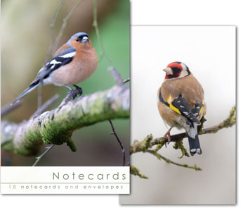 CHAFFINCH AND GOLDFINCH NOTELETS PACK OF 10