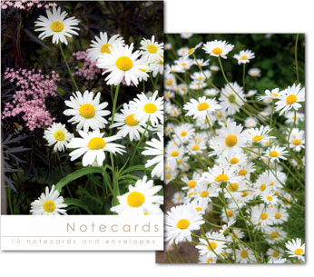 DAISIES AND BLACK ELDER NOTELETS PACK OF 10